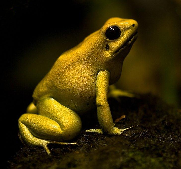 10 самых опасных животных ядов на земле, изображение №11