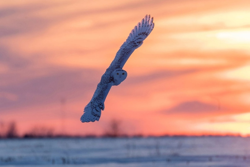 Супер совы, изображение №4