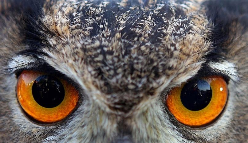 Супер совы, изображение №5