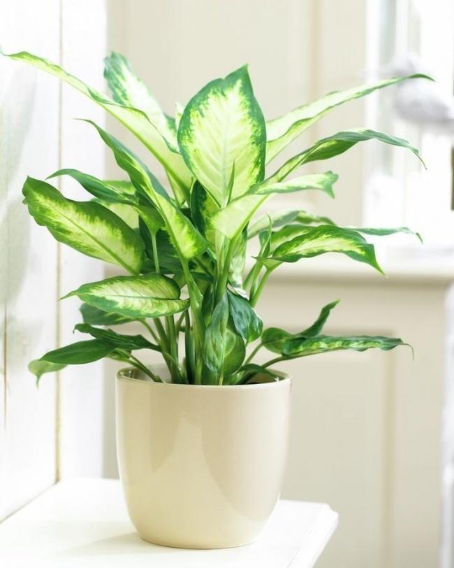 Домашние растения, которые могут выжить даже в самом темном углу, изображение №2
