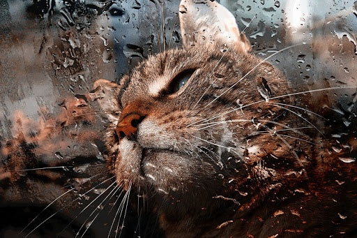 Мокрый май: жителей Марий Эл ожидает холодная и дождливая неделя